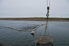 3.Перекрытие РУЗом устья реки Фирсовка, 28.07.2009 г. ЛРЗ на реке имеется.