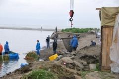 6.Изъятие рыбы на РУЗе,установленном в устье р. Макаровка, 28.07.2009 г.