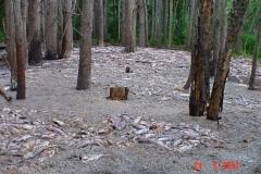 Светлая масса на почве – разложившаяся рыба, брошенная браконьерами