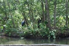3.Браконьеры в верхнем течении реки Береговая