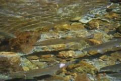 2.Река Очепуха, Корсаковский район