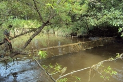 10.Браконьерская загородка, полностью перекрывающая ход рыбы в реке. 20.08.2010