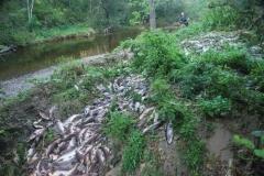 10.река Игривая