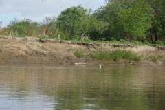 1.Сети в нижнем течении р.Найба