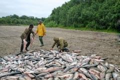 6.Пересчет браконьерского улова