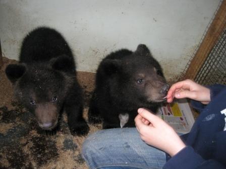 Медвежата – сироты