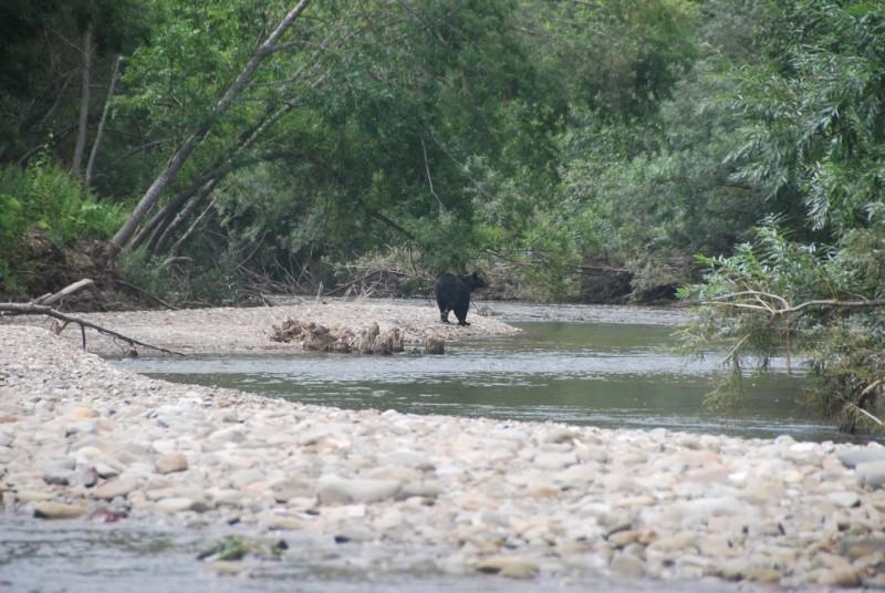 taranai i medvedi