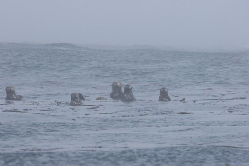 Каланы острова Уруп