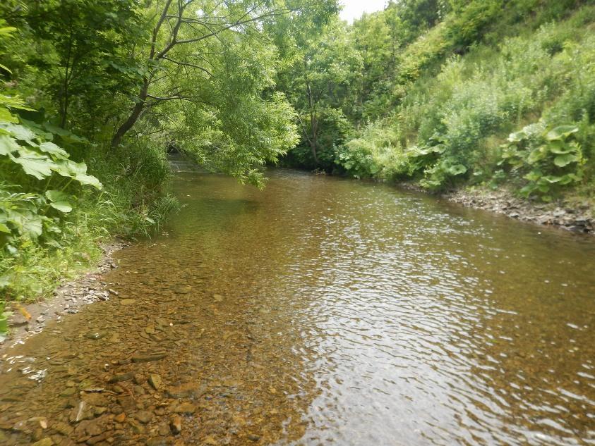 reka Yasnomorka