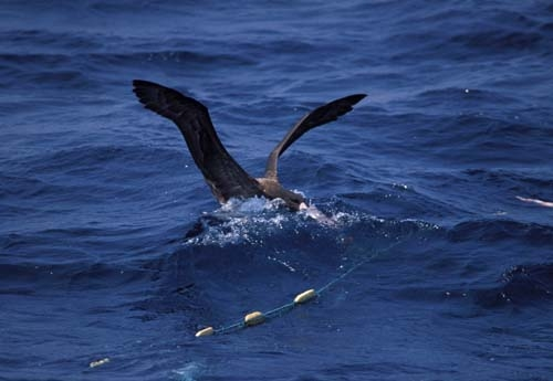 driftnet fishing 1