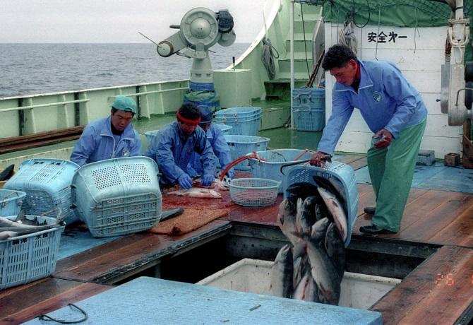 driftnet fishing 10