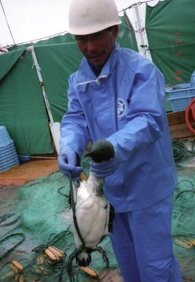 driftnet fishing 3