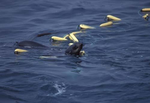 driftnet fishing 4