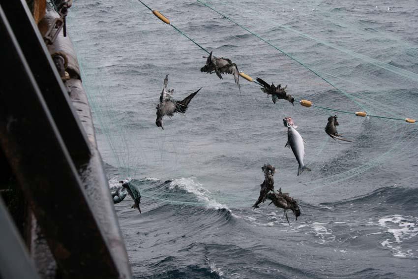 driftnet fishing 7