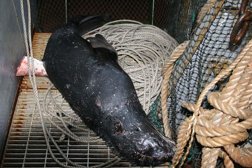 driftnet fishing 8