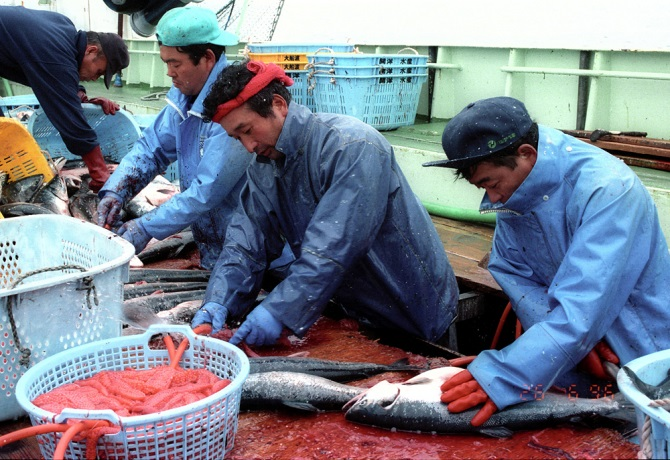 driftnet fishing 9
