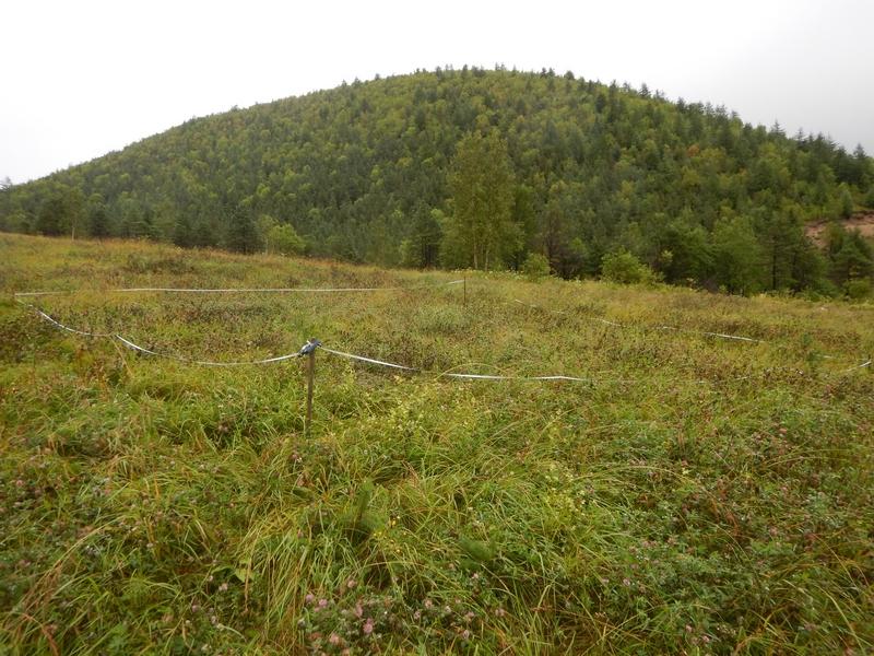 Sakhalin 2  khorosheye vosstanovleniye rastitelnogo pokrova posle fitorekultivatsii okrestnosti s Vzmorye